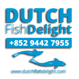 Picture shows the logo for Dutch Fish Delight created by STORMYSUNDAY